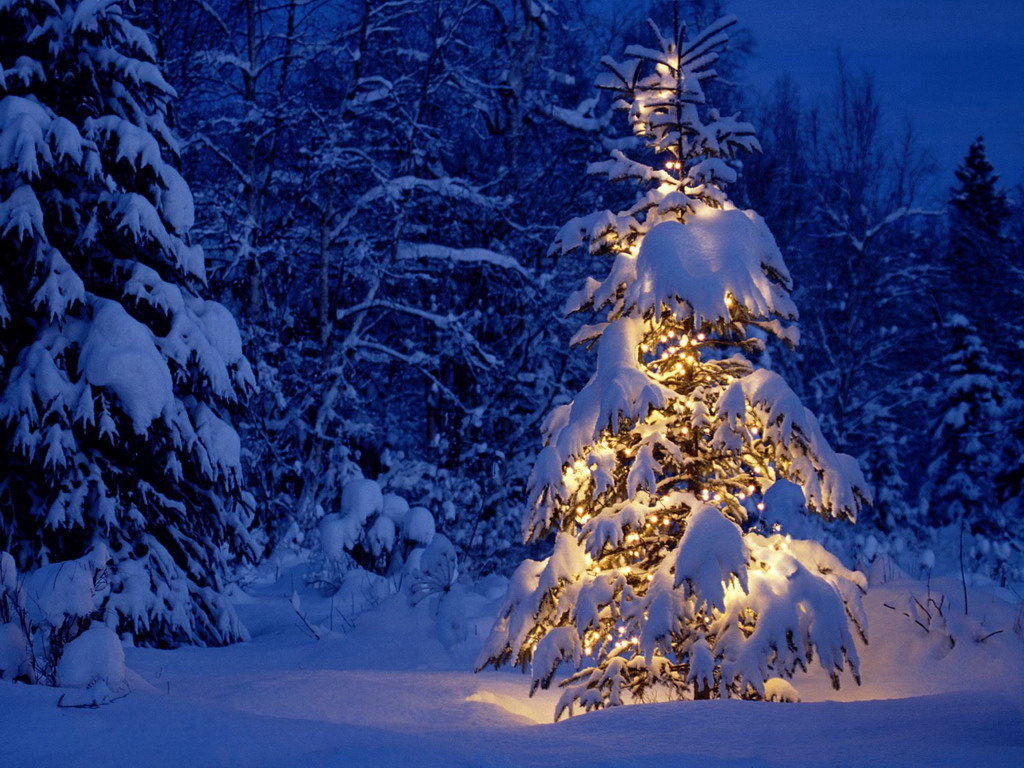 get your christmas tree in lake tahoe this year! – rnr vacation