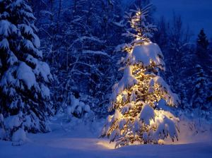Beautiful-Christmas-Tree-Pictures2