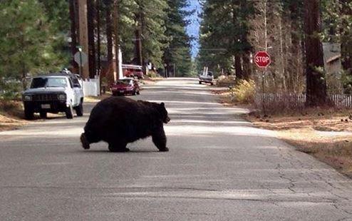 chunky-bear-3