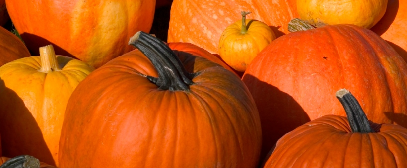 pumpkins-for-blog