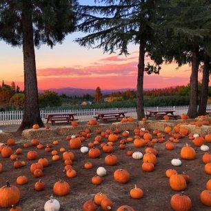 Pumpkin patch sunset
